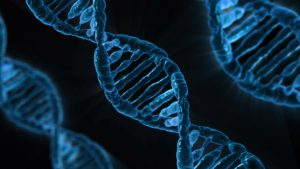 Read more about the article Diabetes and Coronary Heart Disease linked in genetics